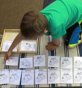Kindergarten Zoology